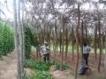 new-planting